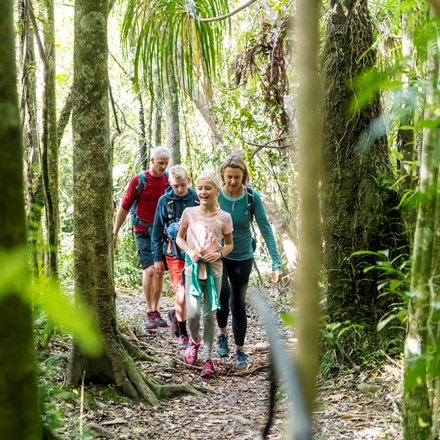 Four people walk through native bush on the northern Queen Charlotte Track in the Marlborough Sounds, New Zealand.
