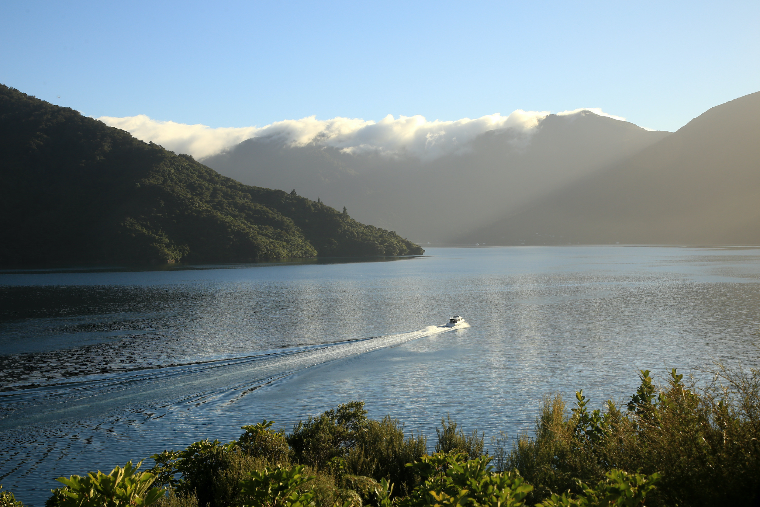 A Cougar Line boat leaves a wake in the calm water as it cruises through the Marlborough Sounds, New Zealand.