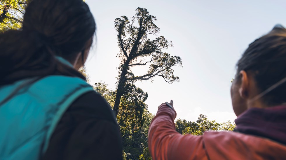 Two walkers look up at a native tree on the 73km Queen Charlotte Track, which features many species of native flora and fauna.