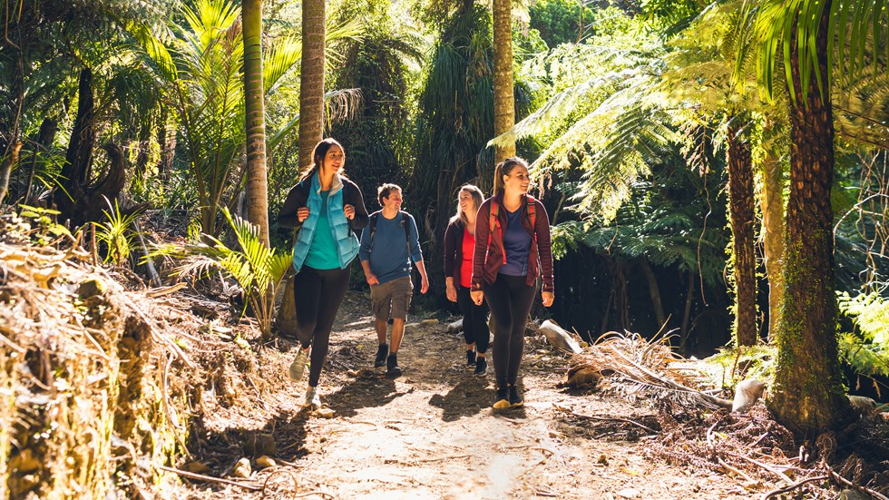 Four people walk on the northern Queen Charlotte Track in the Marlborough Sounds, New Zealand.