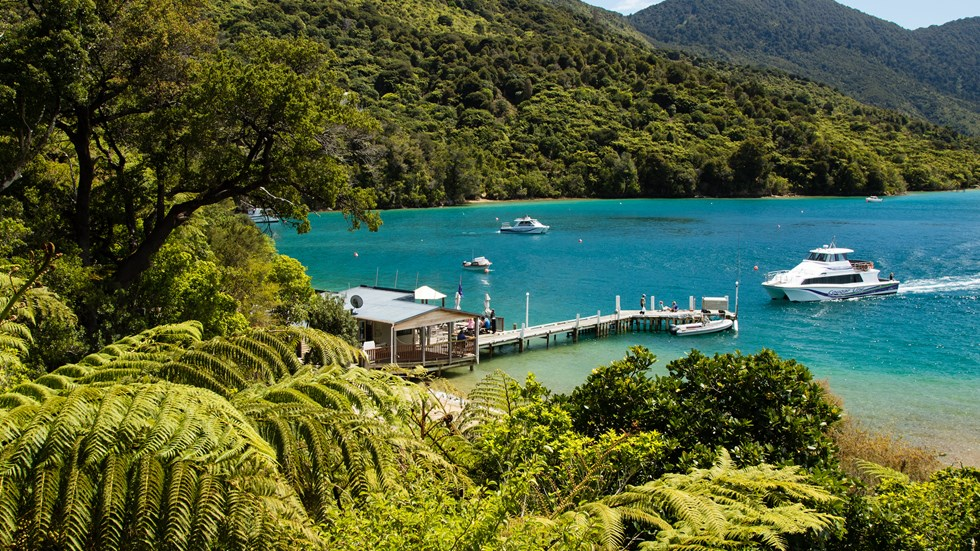 A hillside view through native tree ferns shows a Cougar Line boat arriving at the Punga Cove jetty in the Marlborough Sounds, New Zealand.