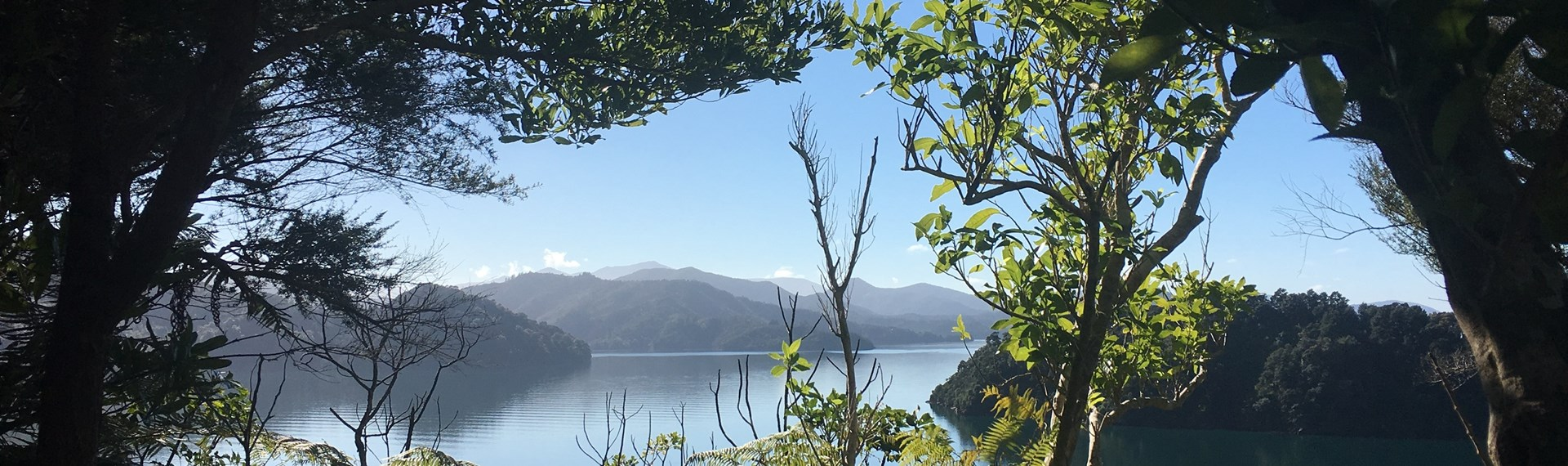 A stunning view across Ngakuta Bay in Grove Arm, near Picton in the Marlborough Sounds, is visible through native New Zealand bush.